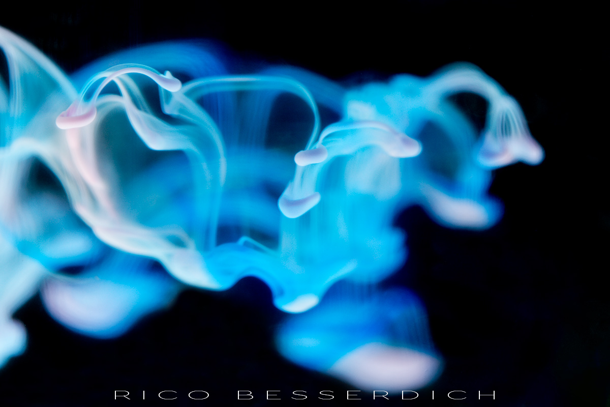Copyright Rico Besserdich - all rights reserved